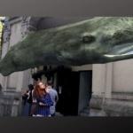 Digital Whales